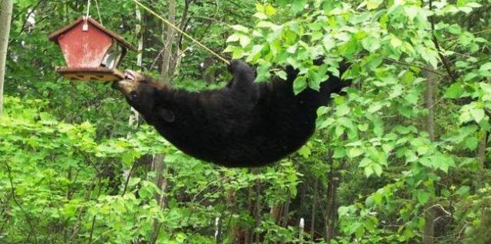 Медвежья охота на птиц (4 фото)