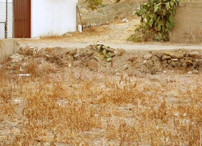 Загадка дня. Вы видите кота? (5 фото)