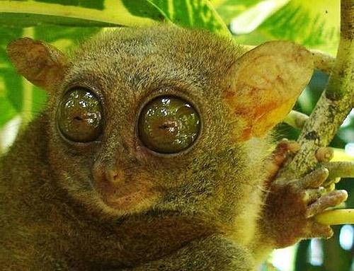 Самые большие глаза на Земле (16 фото)
