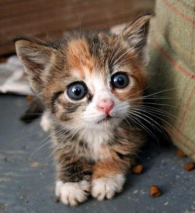 Среди домашних животных самые большие глаза по отношению к размерам тела — у кошки.