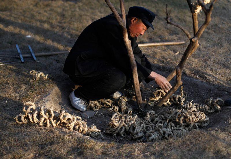 Китаец убирает веревки, защищавшие растения от холода. (Ng Han Guan/Associated Press)