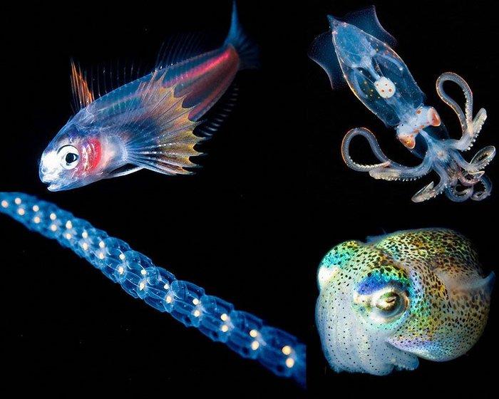 Светящиеся существа из морских глубин (10 фото)