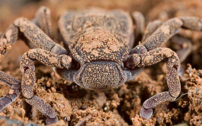 Старый…и новый.<br>Доисторический паук Атева был обнаружен во время экспедиции 2006 года в Гане в лесном заповеднике Атева. Этот новый вид относится к ряду животных, которые не изменились с доисторических времен. Его возраст насчитывает более 300 миллионов лет. В настоящее время они встречаются только в Центральной и Южной Америке и в Западной Африке.