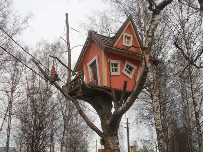 Дом на дереве (6 Фото)