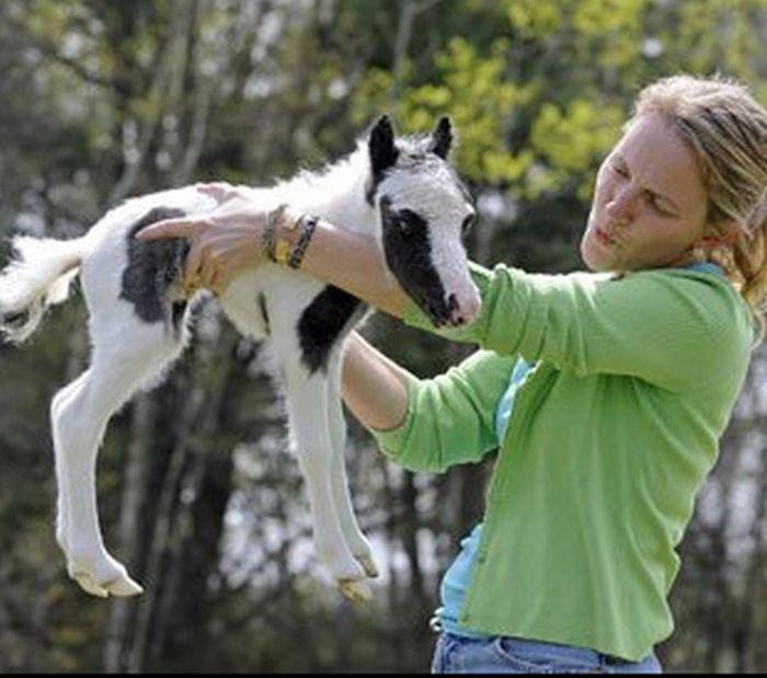 Самая крохотная лошадка в мире (25 фото + видео)