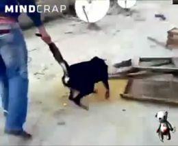 Издевательство над собакой. Жесть