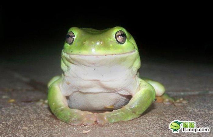 Что ест древесная лягушка? (8 фото)