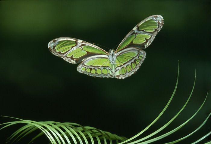 Фото в стиле стоп-кадр от Стивена Далтона (12 Фото)