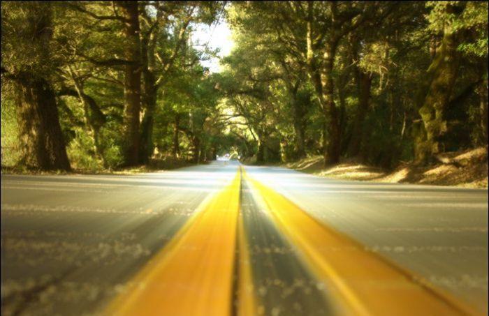 Дорога через лес (1 фото)