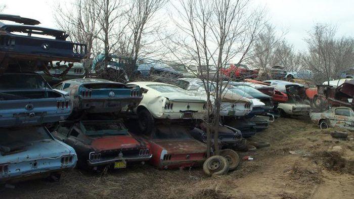 Самая большая свалка из Ford Mustang или страшный сон коллекционера (13 фото)