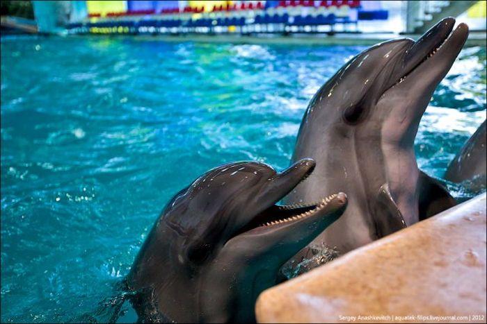 Дельфины-фотомодели (17 фото + 1 видео)