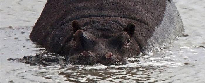 Офигевший крокодил (2 фото)