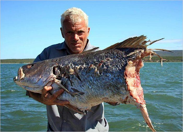 месяц какой рыба можно выращивать в таджикистане принесет