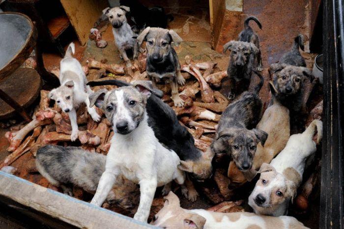 Дед Мазай и 50 собак (25 фото)