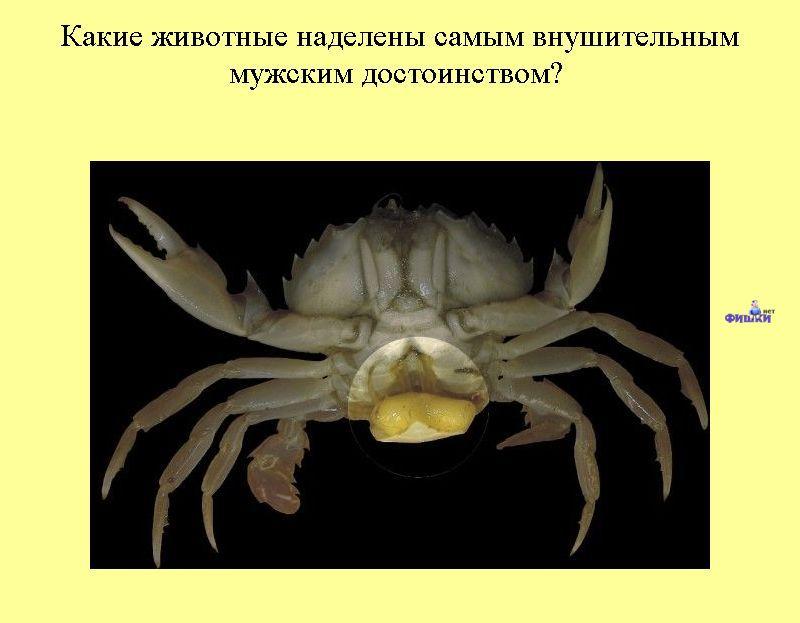 плохо стоит половой член Пугачёв