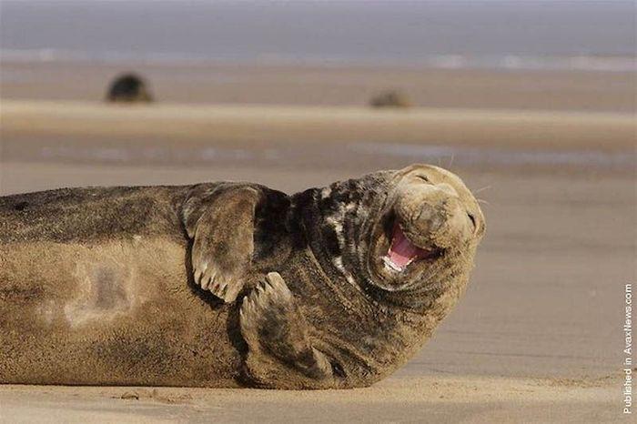 Веселые животные (12 фото)