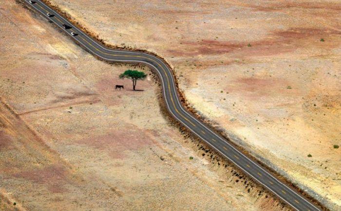 Яркие фото дерево, дорога, изгиб, трасса