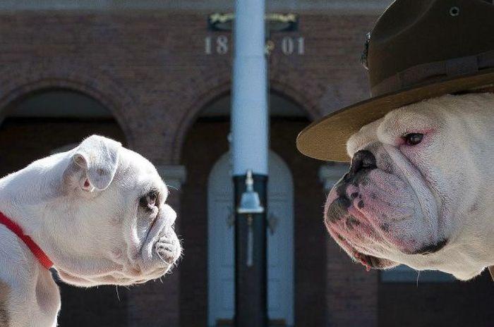 Фото выражение лица, дон, прикол, собака