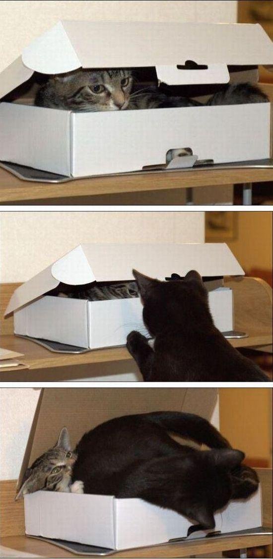 Фотоподборка коробка, кот, питомцы, прикол