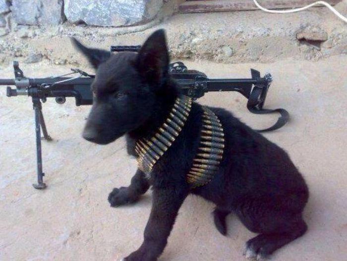 Красивые фото оружие, патроны, собака, террорист
