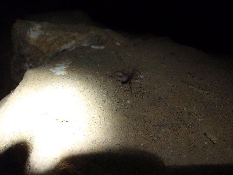 Пещера в калифорнии фото форума
