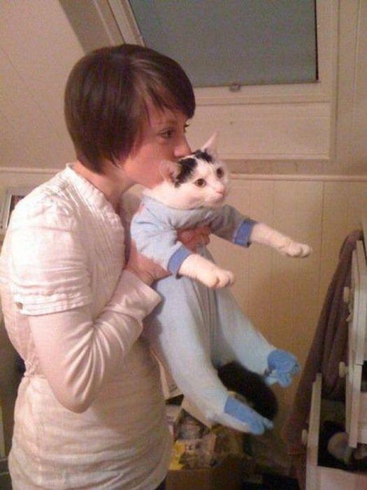 Прикол нарядил кота, пижама, прикол