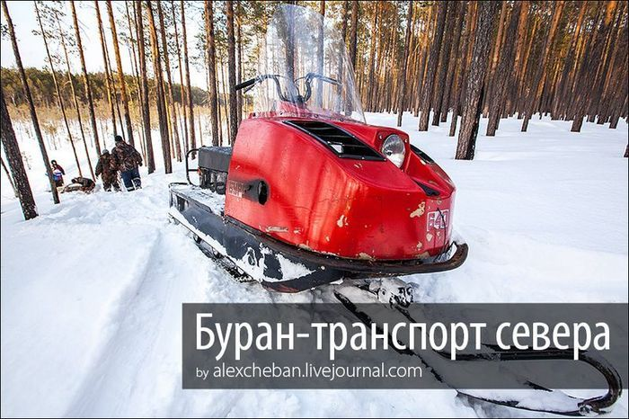 буран, снегоход, снегоход буран, север, транспорт севера