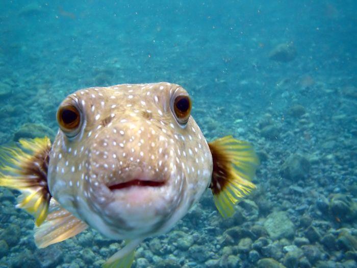 Фотоподборка выражение лица, под водой, рыбка, экзотика