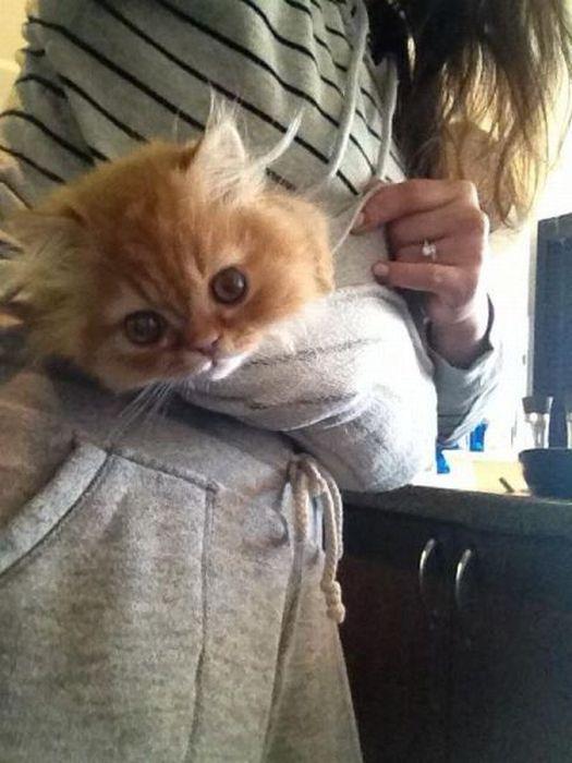 Фотожесть котенок, милаха, милое создание, прикол