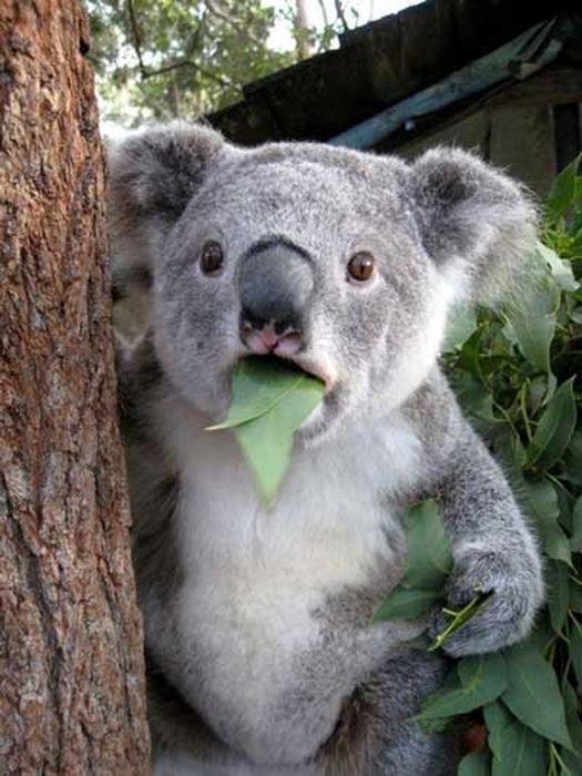 Прекрасные фото выражение лица, коала, медведь, прикол