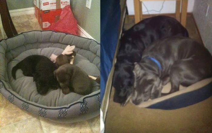 Фото прикол собаки, тогда и сейчас, щенки