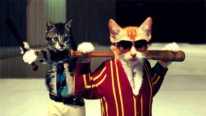 Фотоприкол фото бита, коты, прикол, халат