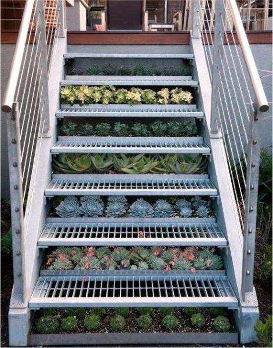 Фотоприкол онлайн бесплатно лестница, овощи, огород, цветы