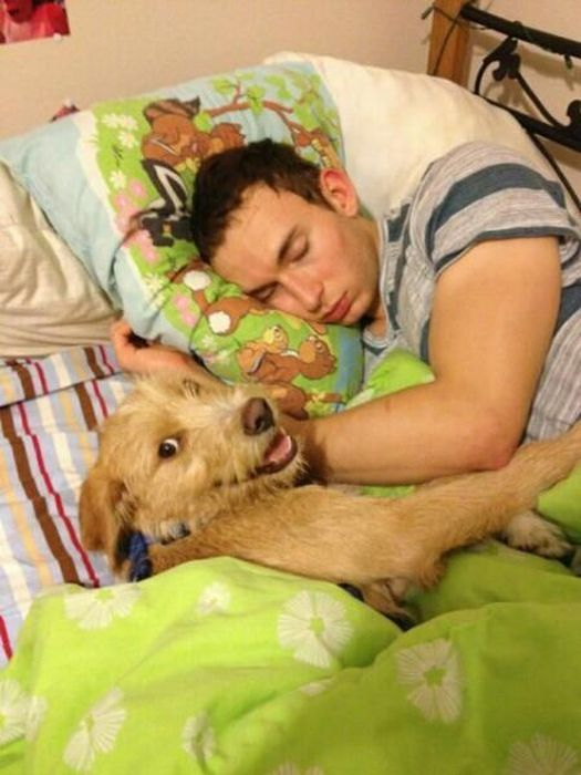 Прикольные фото собака и хозяин, спят вместе
