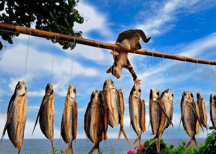 Фотоприкол кот, прикол, рыба, сушится