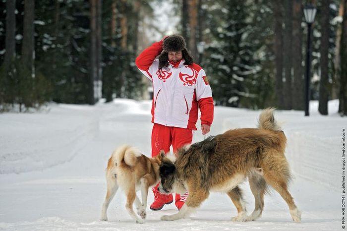 путин, собаки, зима, снег