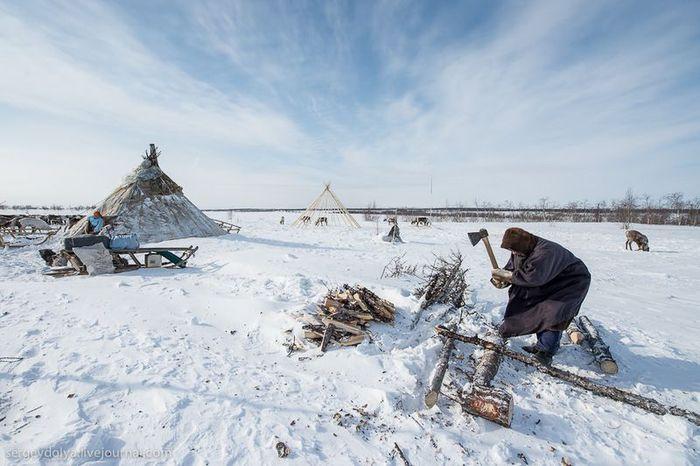 салехард, экскурсия, олени, зима, праздник