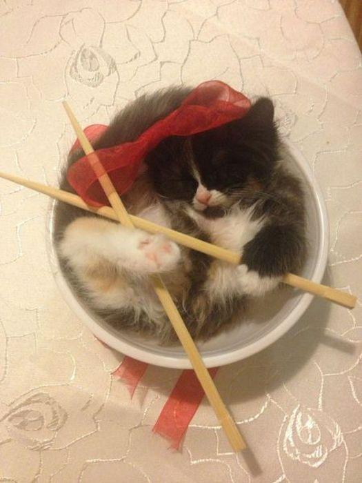 Фото онлайн котенок, милаха, палочки, тарелка