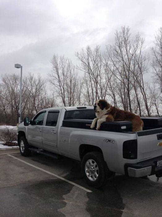 Фотоприкол машина, охранник, собака