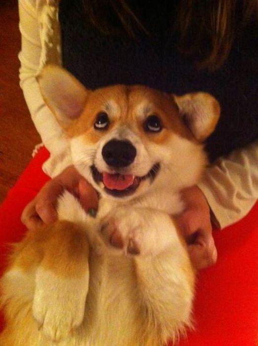 Юмор прикол выражение лица, радость, собака