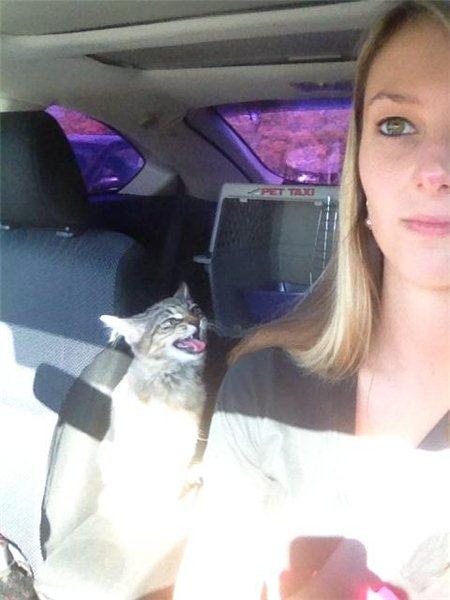 Бугагашеньки выражение лица, девушка, котейка, машина