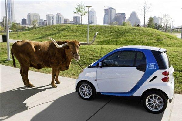 Фотоприкол онлайн бесплатно smart, буйвол, маленькая, машина