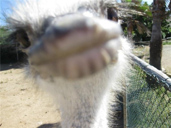 Яркие фото зоопарк, лицо, мордочка, страус