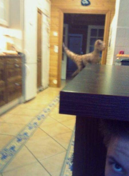 Прикол картинка динозавр, под столом, ребенок, страшно