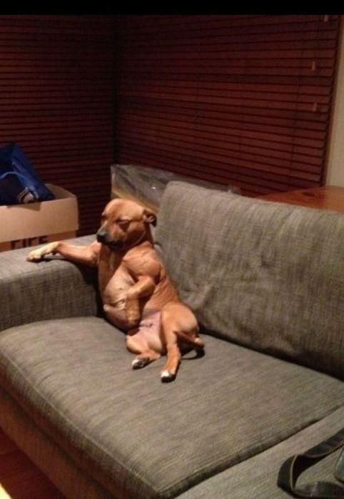 Юмор диван, прикол, разлегся, собака