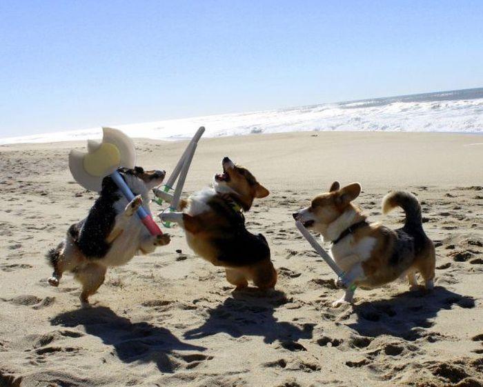 Фотоприкол онлайн мечи, на берегу, пляж, собаки