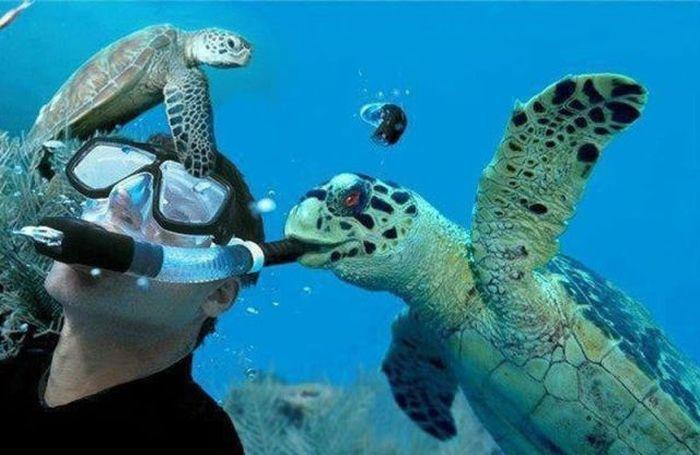 Новые фото под водой, прикол, трубка, черепаха