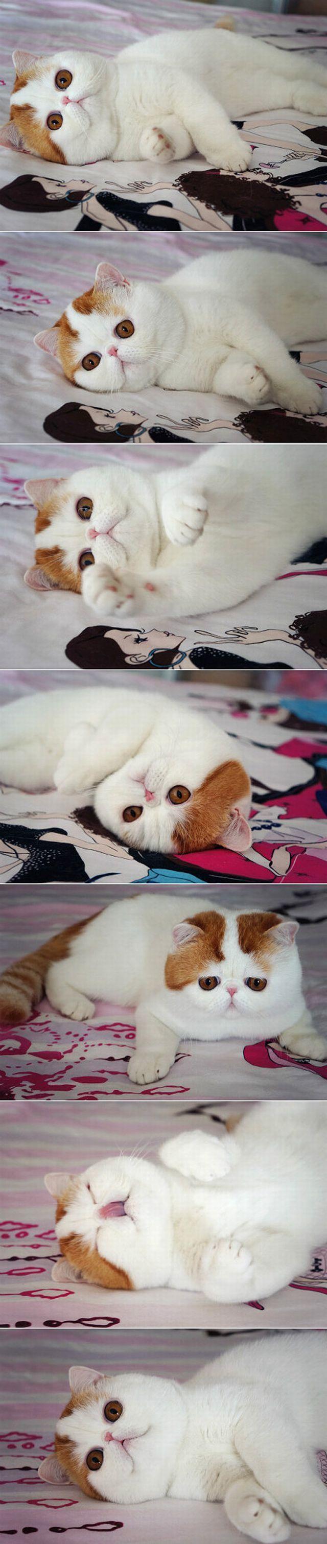 Фотоприкол онлайн выражение лица, кот, на кровати, необычный