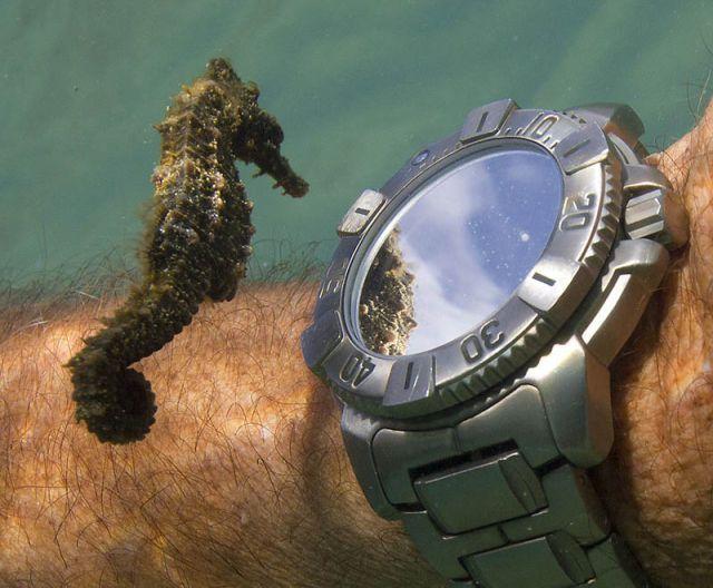 Прикольные фото морской конек, наручные часы, под водой