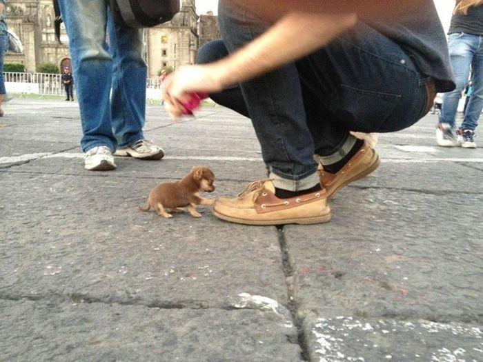 Яркие фото ботинок, малютка, щенок